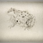 Bullfrog--Ink on insect-embeded abaca paper