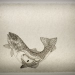 Rainbow Trout--Ink on insect-embeded abaca paper